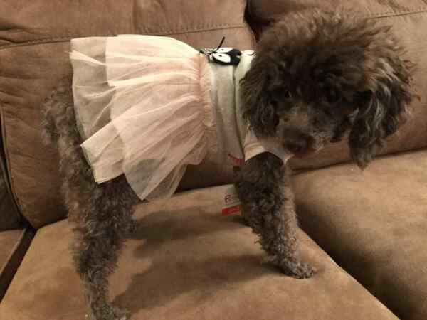 Small breed dog clothes $7.79