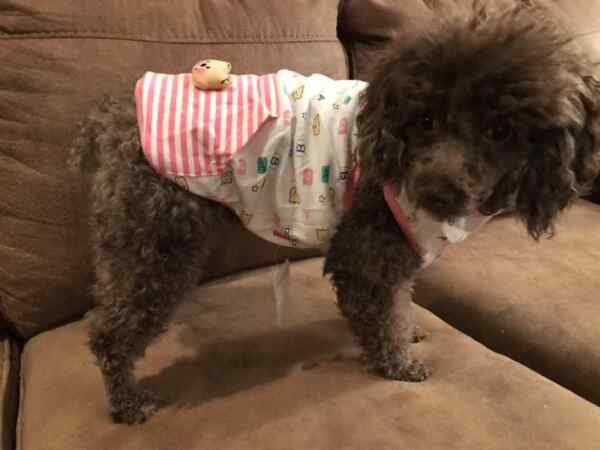 Small breed dog clothes $5.89