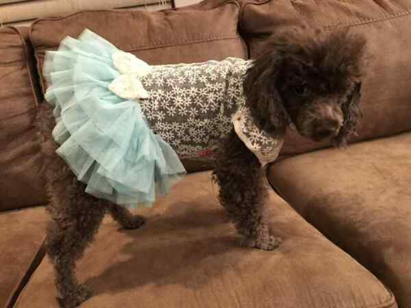 Small breed dog clothes $6.69