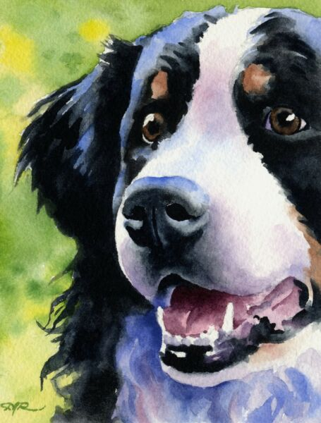 BERNESE MOUNTAIN DOG Painting 8 x 10 Art Print by Artist DJ Rogers wCOA