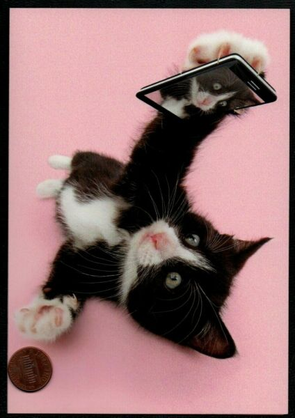 Birthday Cat Kitten Taking A Selfie Picture On Phone -  Birthday Greeting Card