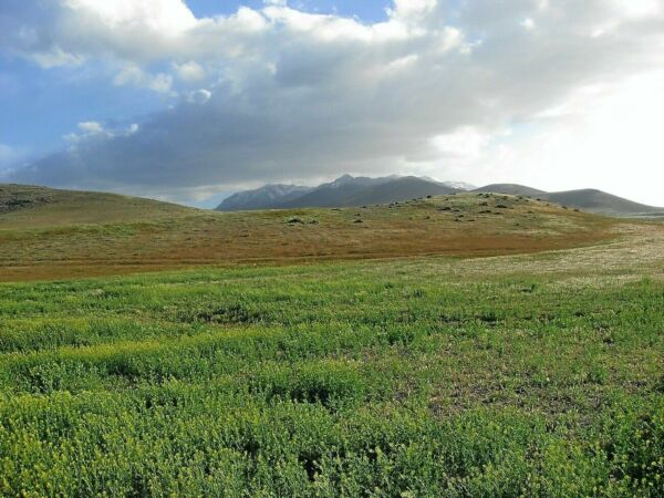ULTRA RARE 40 ACRE NEVADA RANCH NEAR TOWN & RIVER! CASH SALE! NO RESERVE!