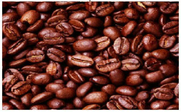 LAVANTA COFFEE GREEN COSTA RICA SHB EP TWO POUND PACKAGE