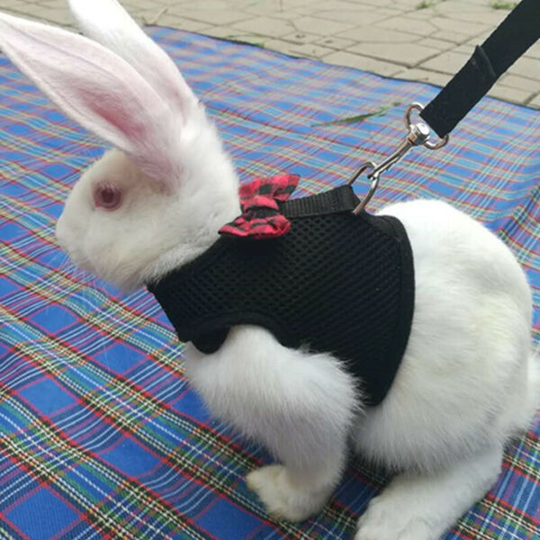 BlackRed Adjustable Soft Harness with Elastic Leash for Rabbit Bunny US