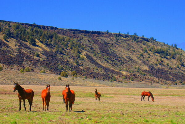 One-acre of Peaceful Property MODOC COUNTY