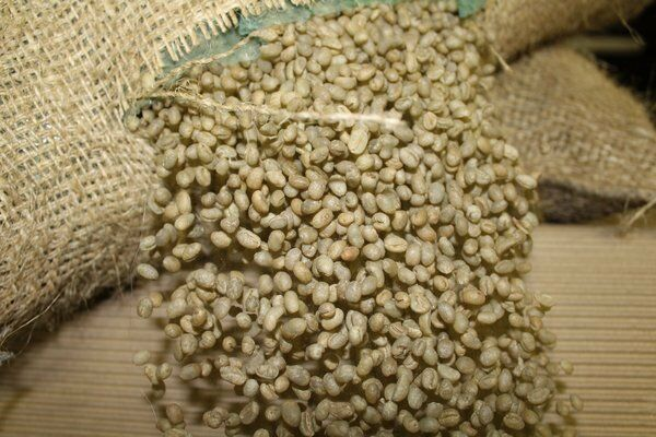 LAVANTA COFFEE GREEN SUMATRA PEABERRY TWO POUND PACKAGE