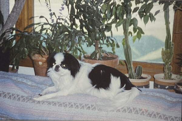 Vintage Photo Slide Dog Posed Gizmo Black White $9.99