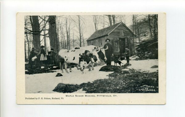 Pittsfield VT antique postcard Maple Sugar making ox team people dog shed $10.00