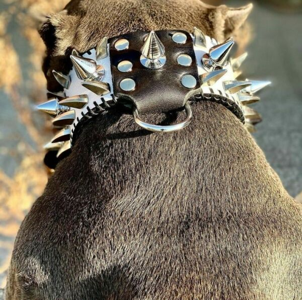 Spiked Dog Collar Leather Silver Studded Rivet Small And Big Breeds Adjustable $256.49