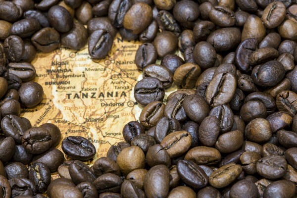 Up to 15 lbs Tanzanian Mondul Estate Northern Peaberry Coffee Beans Fresh Daily
