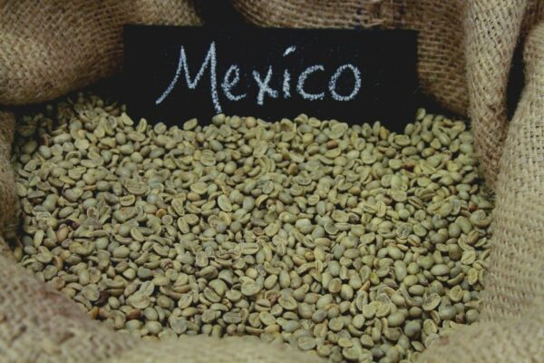 Up To 100 lbs Mexican Chiapas HG EP Organic Fresh Crop Green Coffee Beans