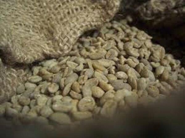 Up To 100 lbs Colombian Santa Barbara Estates Excelso EP Green Coffee Beans