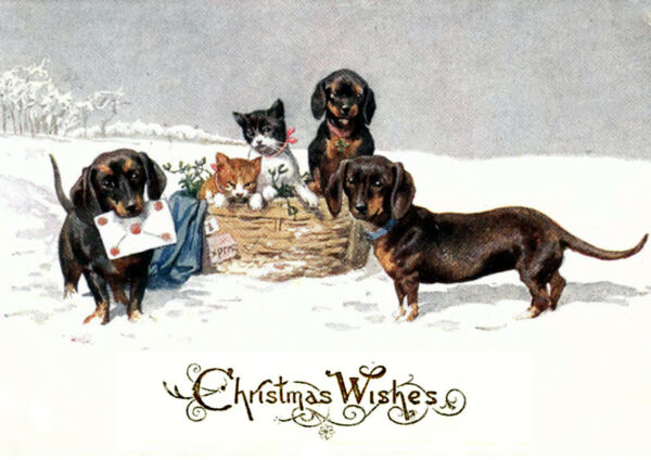 DACHSHUND AND KITTEN IN SNOW SINGLE DOG PRINT GREETING CHRISTMAS CARD