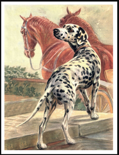 DALMATIAN DOG AND HORSES LOVELY VINTAGE STYLE DOG ART PRINT POSTER