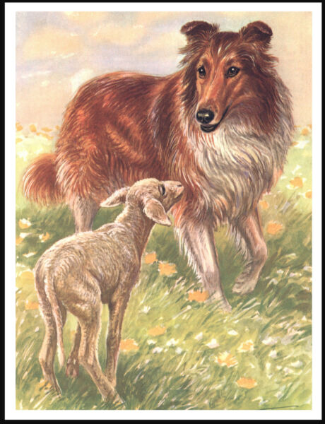 ROUGH COLLIE AND LAMB LOVELY VINTAGE STYLE DOG ART PRINT POSTER