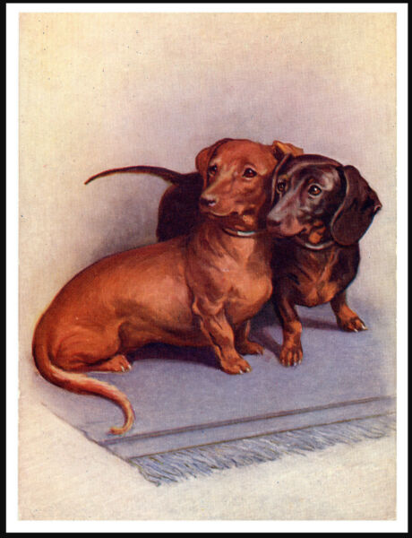 DACHSHUND TWO DOGS LOVELY IMAGE VINTAGE STYLE DOG PRINT POSTER