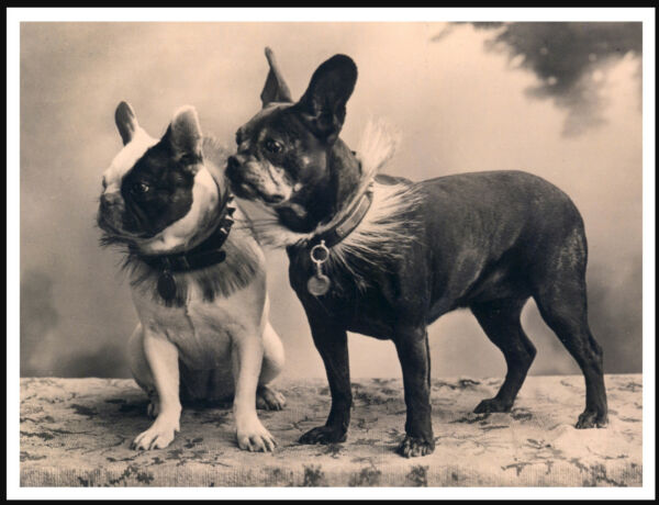 FRENCH BULLDOG TWO DOGS LOVELY VINTAGE STYLE IMAGE DOG PHOTO PRINT POSTER