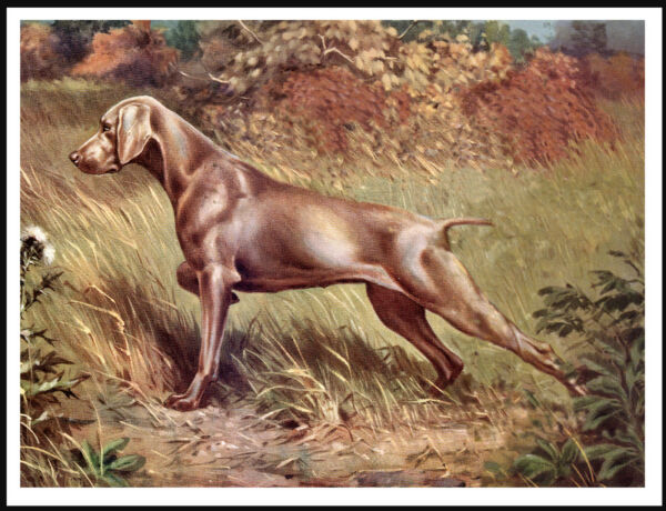 WEIMARANER DOG AT WORK LOVELY IMAGE VINTAGE STYLE DOG PRINT POSTER