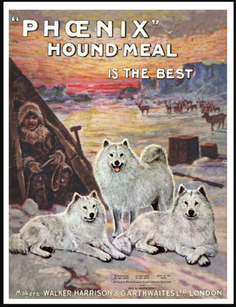 SAMOYED ARTIC SCENE LOVELY VINTAGE STYLE DOG FOOD ADVERT ART PRINT POSTER
