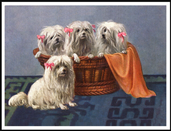 MALTESE FOUR LITTLE DOGS IN A BASKET LOVELY VINTAGE STYLE DOG ART PRINT POSTER