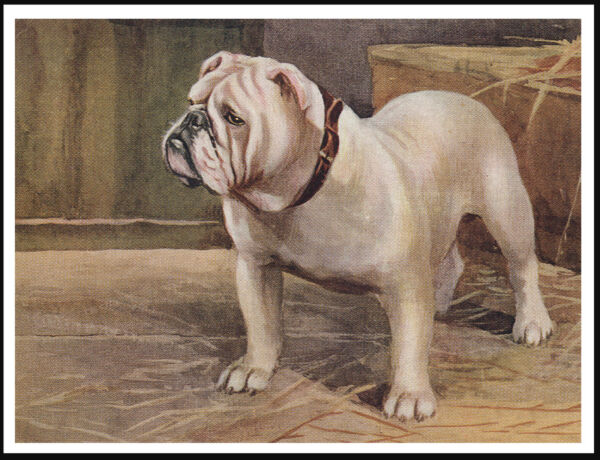 ENGLISH BULLDOG GREAT IMAGE LOVELY VINTAGE STYLE DOG ART PRINT POSTER