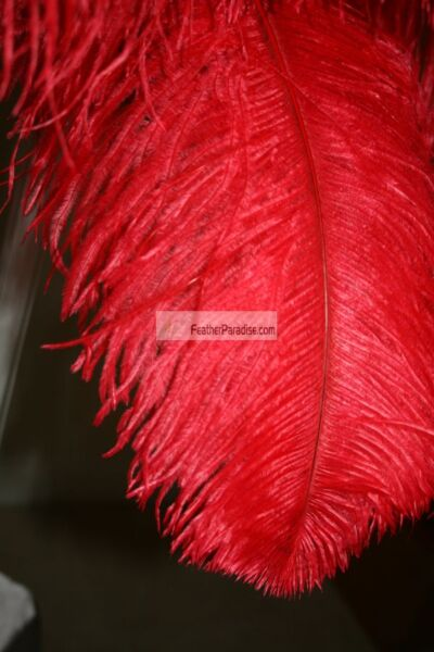 Red Ostrich Feathers Plume Wing  Horse Feather 24-26 inches 50  Pcs (GAUSA)
