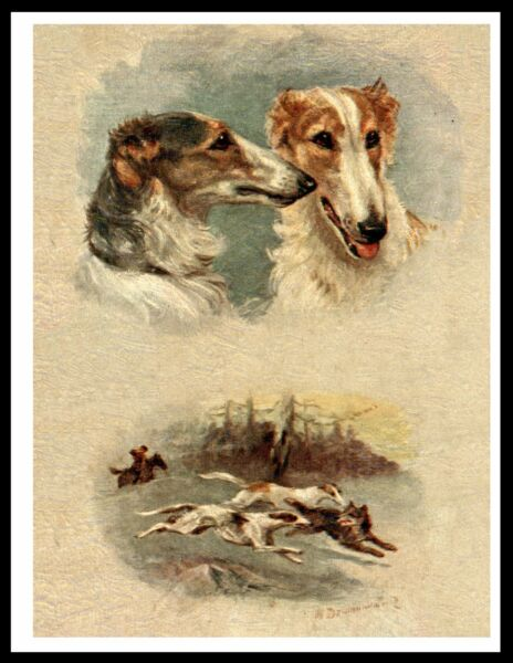 BORZOI HEAD STUDY AND HUNTING SCENE LOVELY IMAGE VINTAGE STYLE DOG PRINT POSTER