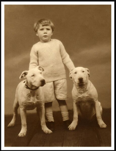 ENGLISH BULL TERRIER SMALL BOY AND DOGS LOVELY VINTAGE STYLE DOG PRINT POSTER