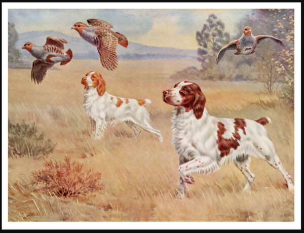 BRITTANY SPANIEL DOGS AND BIRDS LOVELY VINTAGE STYLE DOG ART PRINT POSTER