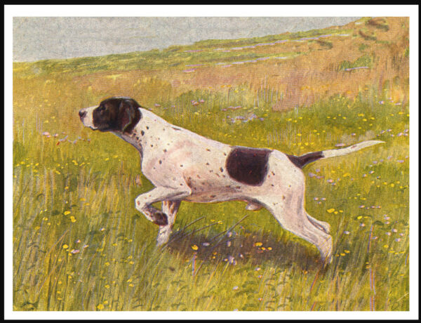 POINTER LOVELY IMAGE VINTAGE STYLE DOG PRINT POSTER