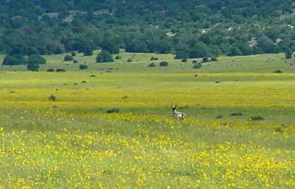 42 Acres Land NE of Trinidad, Las Animas County CO. Owner Finance with $200 Down