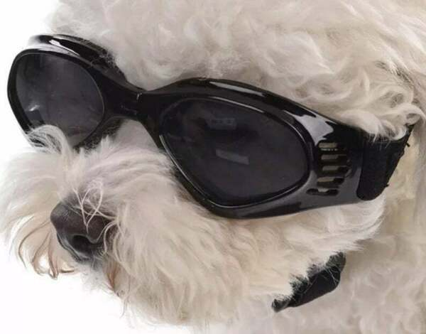 Small dog sunglasses dog goggles doggles dog glasses protect eyes from wind $6.50