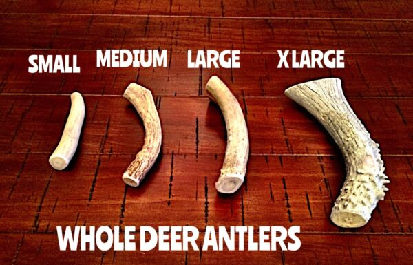 1 Small Deer Antler Dog Chew Free Shipping $7.99