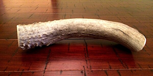Great For Ultra Aggressive Chewers 1 Extra Large Deer Antler Dog Chew Free Ship $22.99