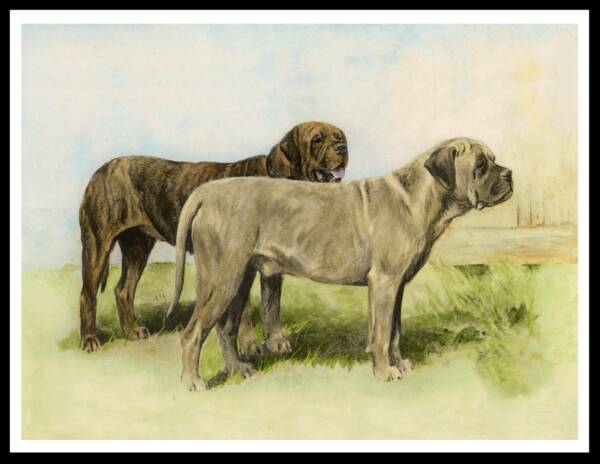 TWO MASTIFF DOGS LOVELY VINTAGE STYLE DOG ART PRINT POSTER
