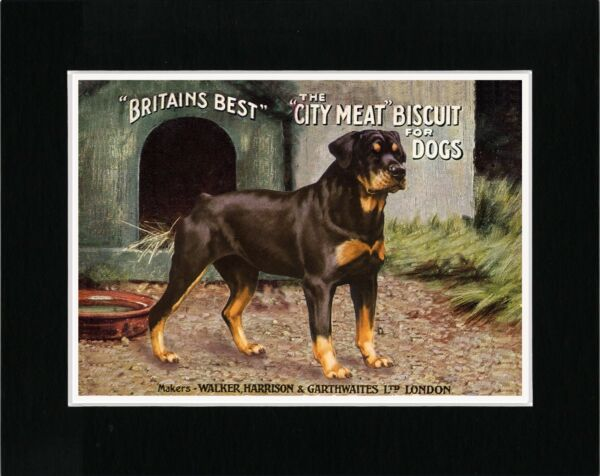 ROTTWEILER ON LOVELY VINTAGE STYLE DOG FOOD ADVERT PRINT MATTED READY TO FRAME