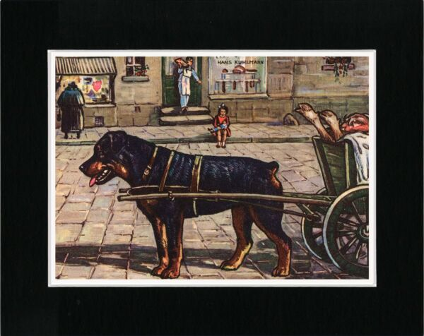 ROTTWEILER PULLING BUTCHERS CART LOVELY VINTAGE STYLE DOG ART PRINT READY MATTED