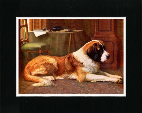 SAINT BERNARD AT REST LOVELY VINTAGE STYLE IMAGE DOG ART PRINT READY MATTED