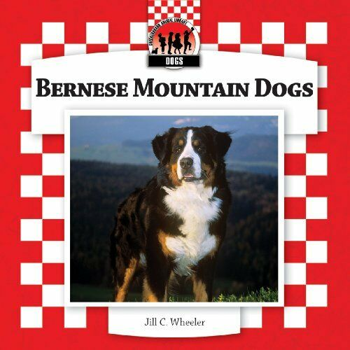 Bernese Mountain Dogs (Checkerboard Animal Library: Dogs)