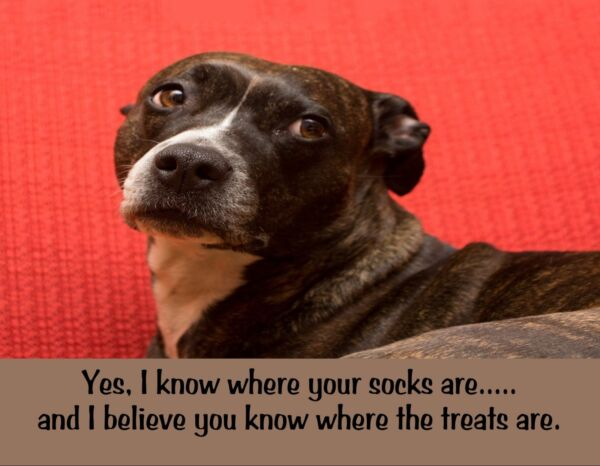 METAL FRIDGE MAGNET I Know Where Socks Are You Know Where Treats Are Dog Humor $5.36