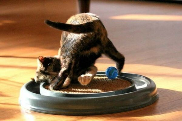 Bergan Turbo Scratcher Cat Toy W Catnip amp; Ball replaceable pad Colors May Vary $19.99