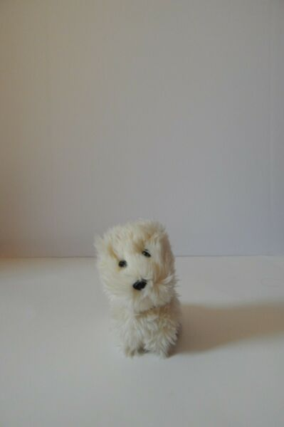American Girl of Today Dog Coconut Good used condtion $8.99