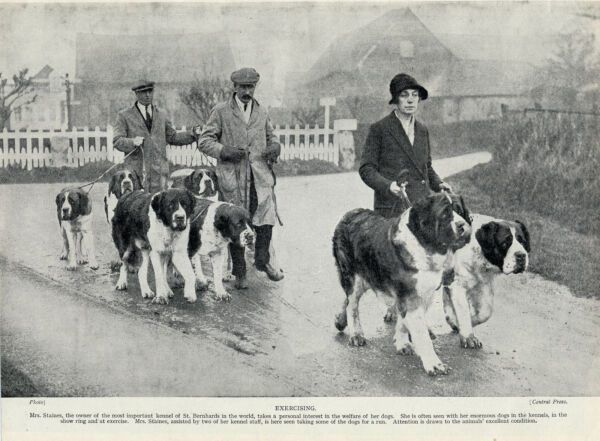 SAINT BERNARD GROUP OF DOGS BEING EXERCISED OLD 1934 DOG PRINT GBP 6.49