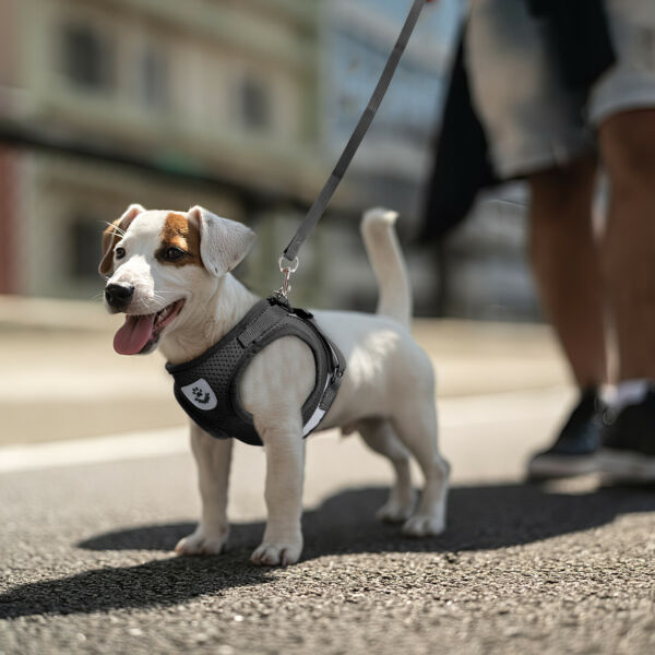 Small Dog Puppy Breathable Mesh Harness Vest Collar Soft strap Leash Reflective $7.98