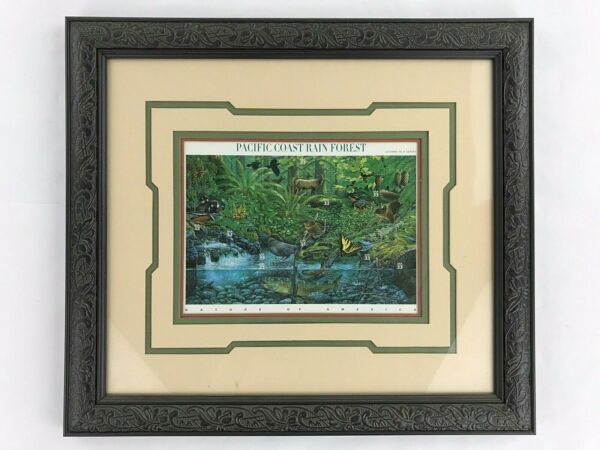 Pacific Coast Rain Forest Picture Framed Stamps American Stamp Collectibles USA