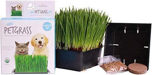 Handy Pantry Organic Cat Grass Kit Includes 1 Tray 1 Soil Puck and Non GMO