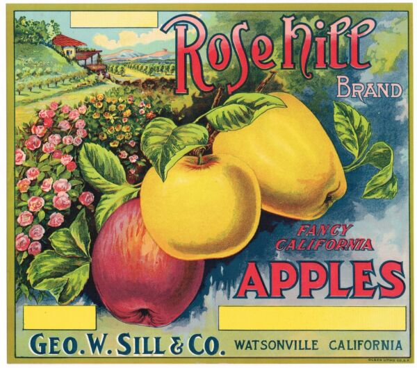 ROSEHILL CALIFORNIA APPLE CRATE LABEL STONE LITHO ORIGINAL C1920 WATSONVILLE
