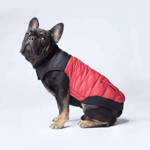 Dog Coat - Canada Pooch Summit Stretch Vest - Stretch Belly Panel for Comfort