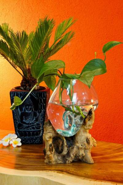 Molten glass on root wood glass vase on teak root as a fancy decoration object $39.77