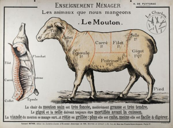 Vintage French Le Mouton Meat Diagram Painting 8x10 Real Canvas Art Print $13.49